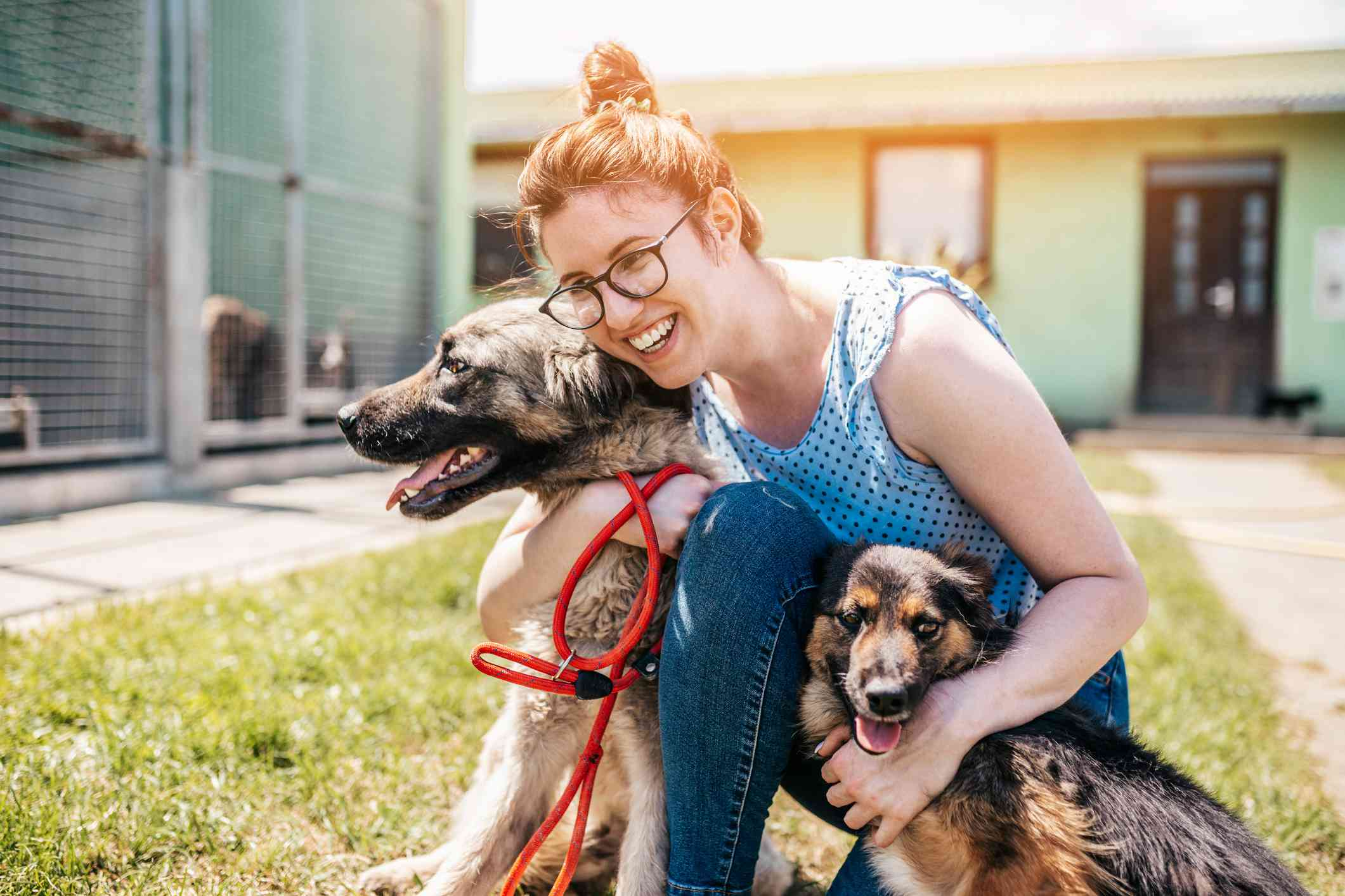 Young woman plays with dogs at dog shelter