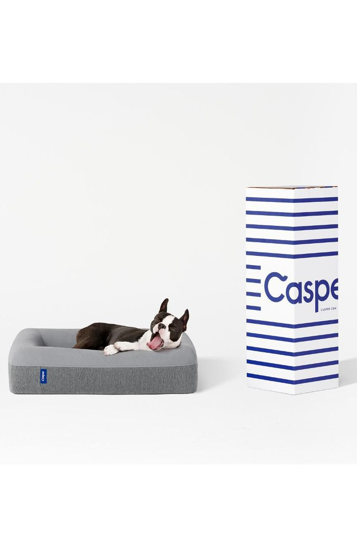 Casper Dog Bed 10 Most Beautiful Dog Breeds