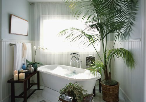 bathtub with tall potted palm plant