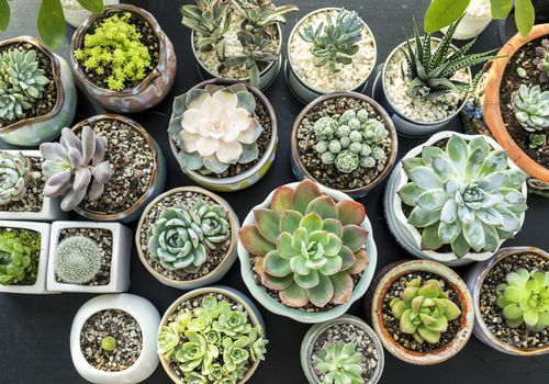 pequeñas plantas suculentas verdes y rojas en macetas de cerámica