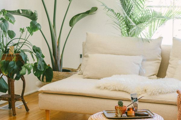 living room with white couch and bird of paradise plant in background