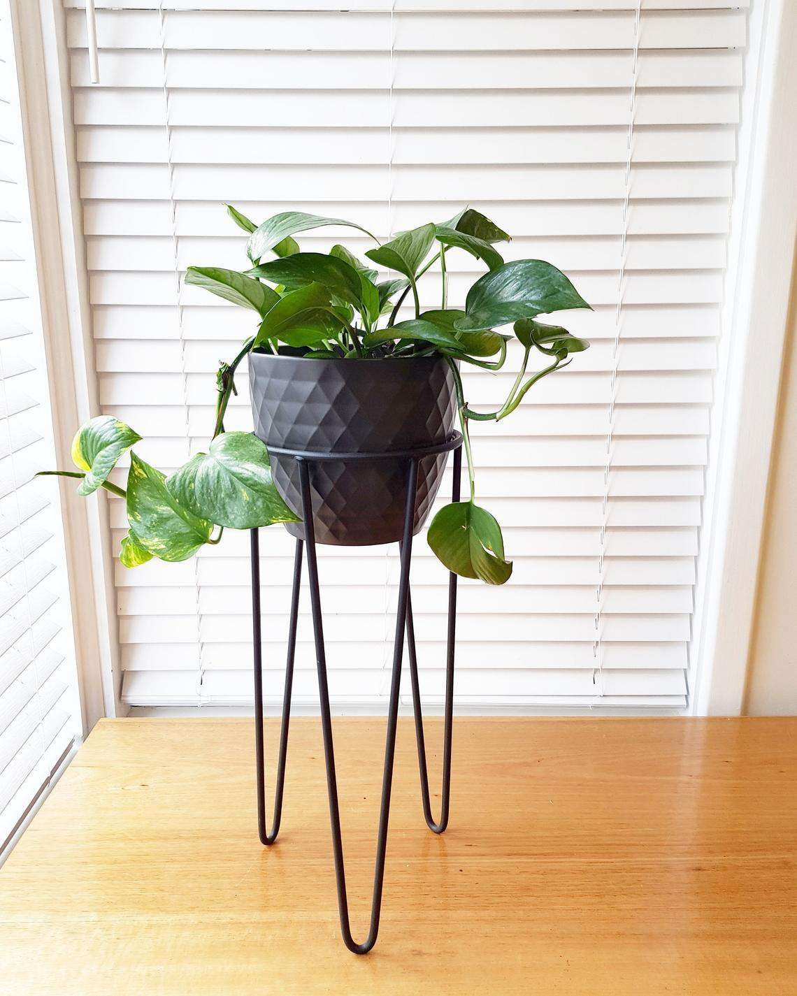 Hairpin leg plant stand