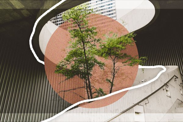 tree growing through an open staircase