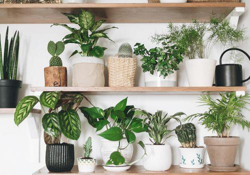 jardín de plantas pothos