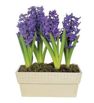 Flower Shopping Hyacinth Planter