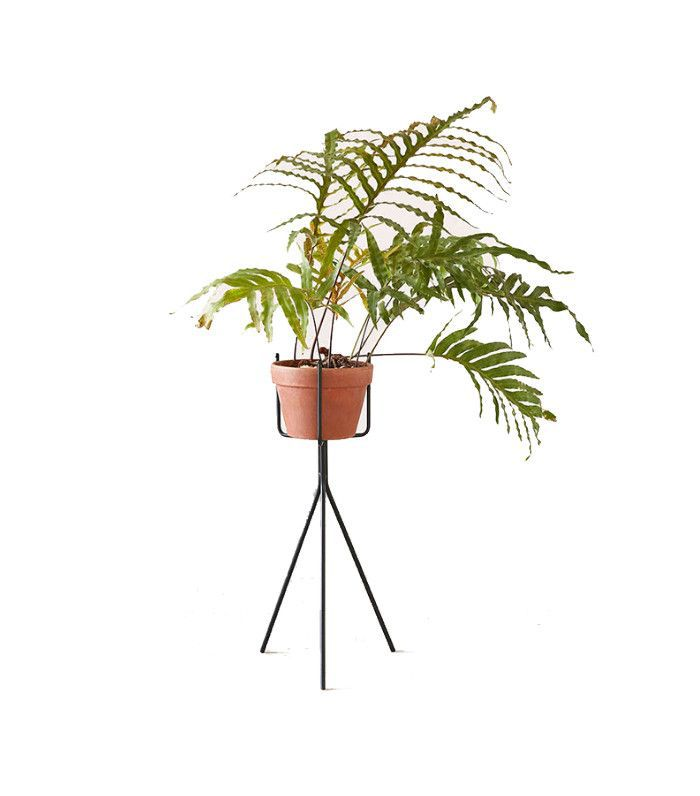 Urban Outfitter Tripod Plant Stand
