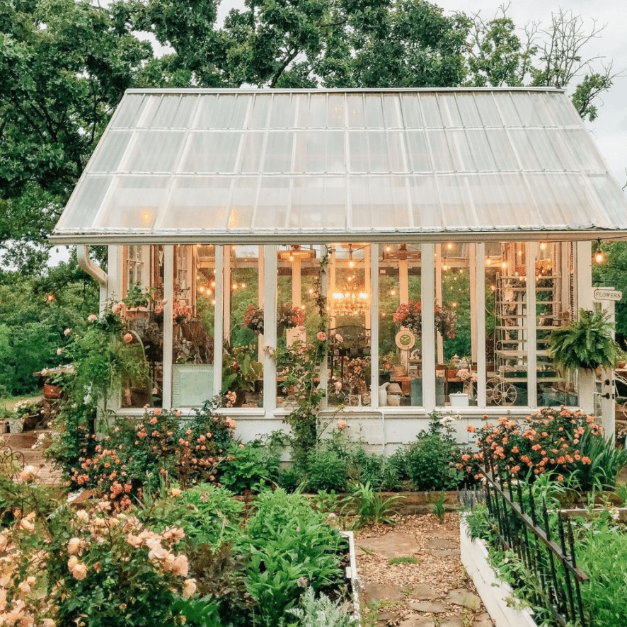Beautiful greenhouse with rose bushes on outside.