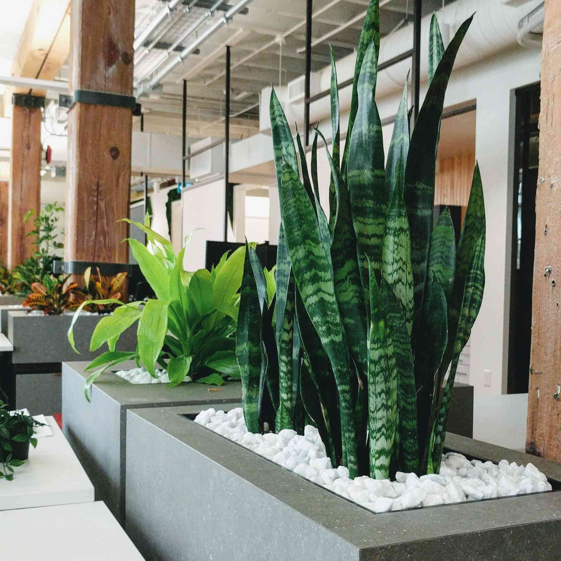 flowerbox indoors