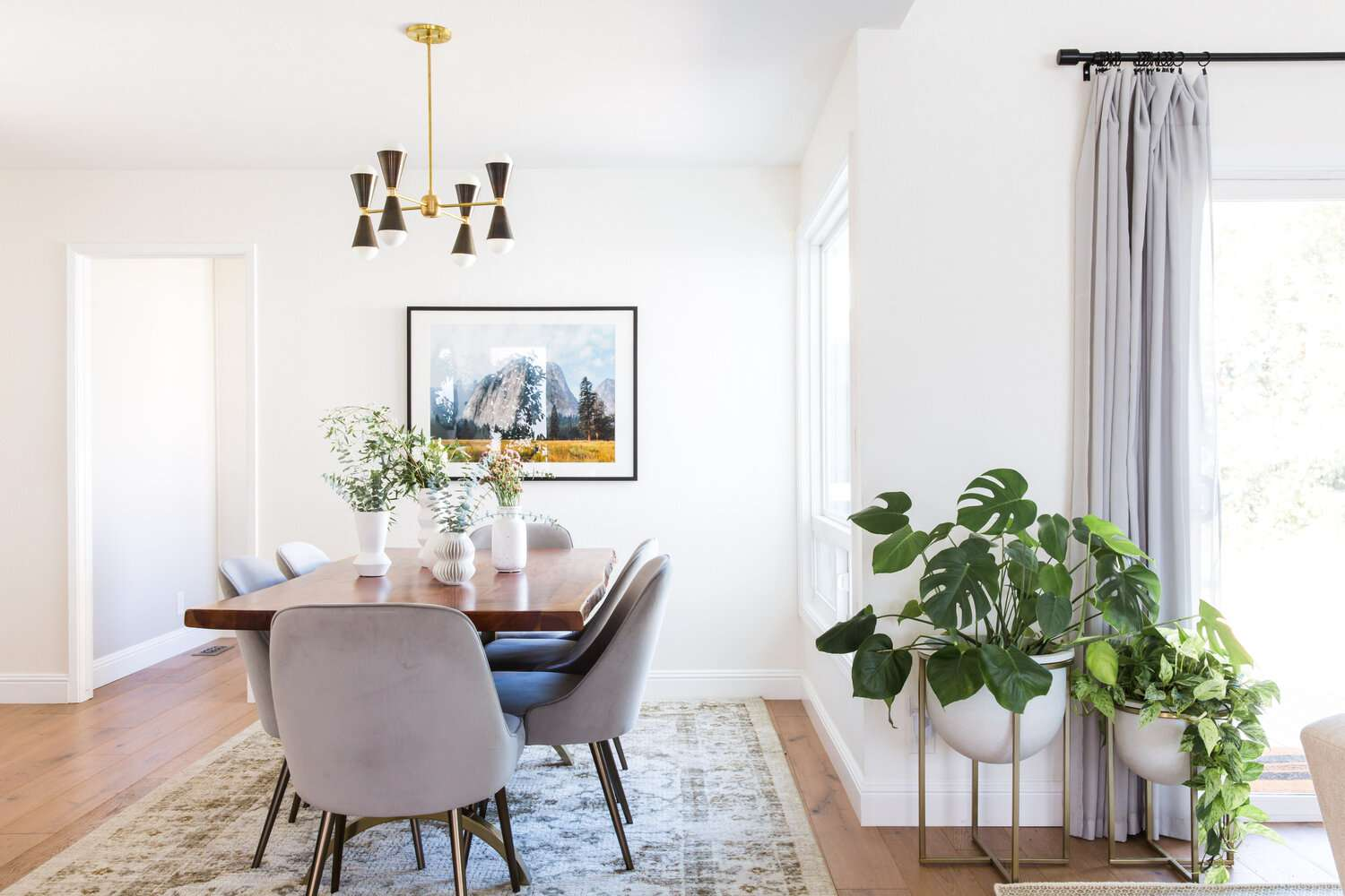 Monstera plant in a modern dining room