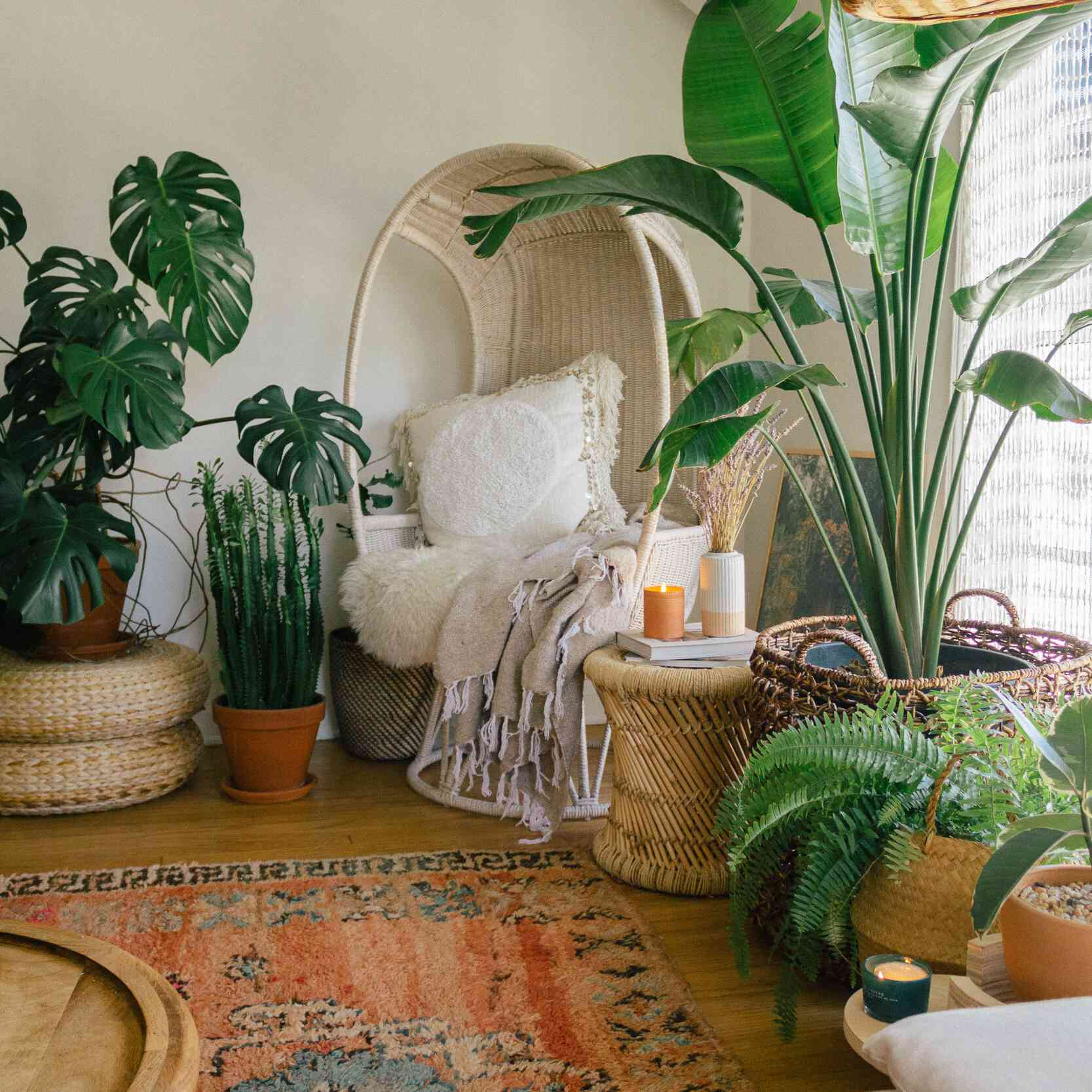 A room full of plants and a printed rug