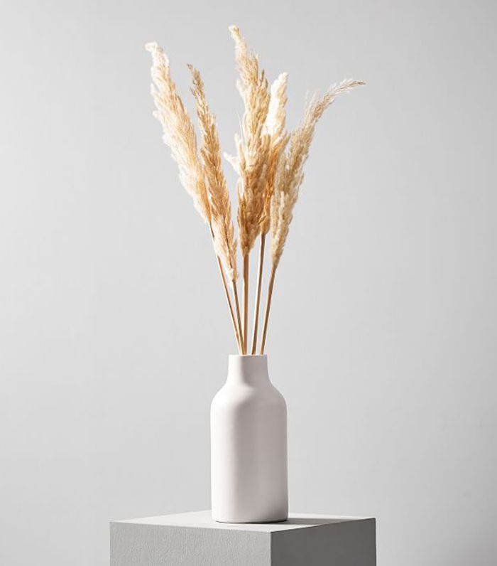 West Elm Dried Hardy Pampas Grass