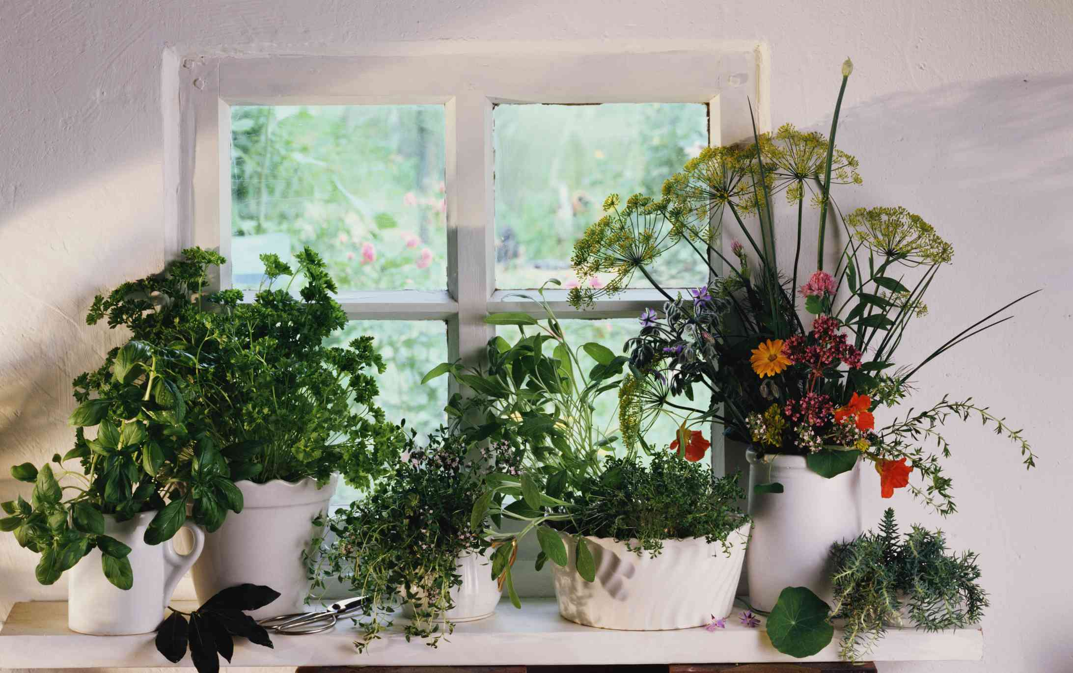 assorted herbs growing on white kitchen windowsill with flower bouquet in white vase
