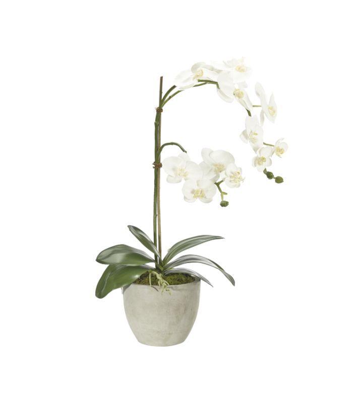 NDI Orchid
