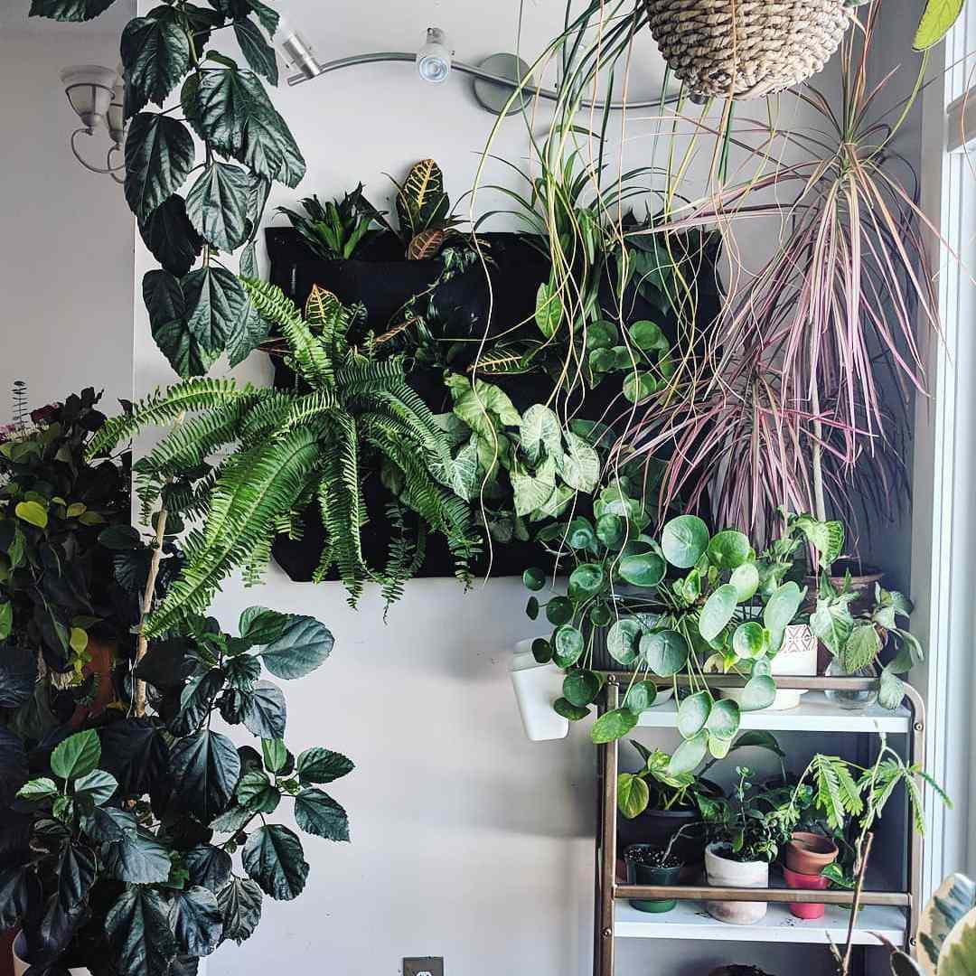 hanging flowerbox