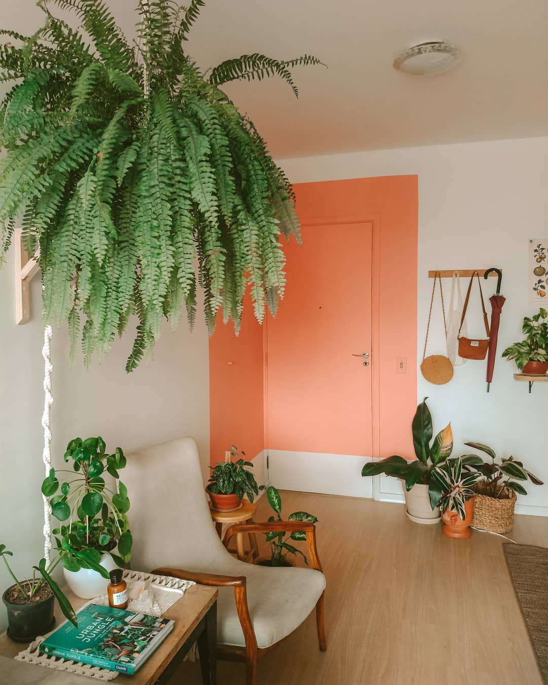 boston fern hanging in white and orange living room with other potted plants and chair