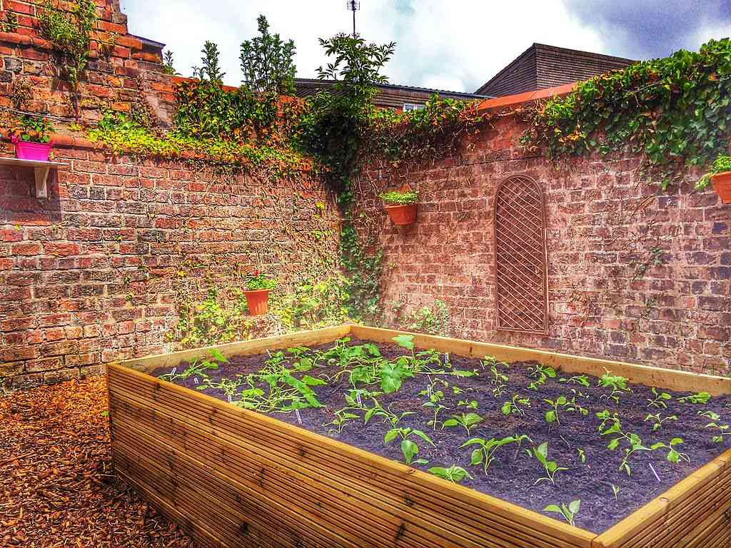 A raised garden bed.