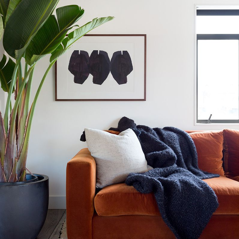 Living room with large velvet couch and bird of paradise plant