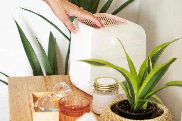Canopy Humidifier with Plants