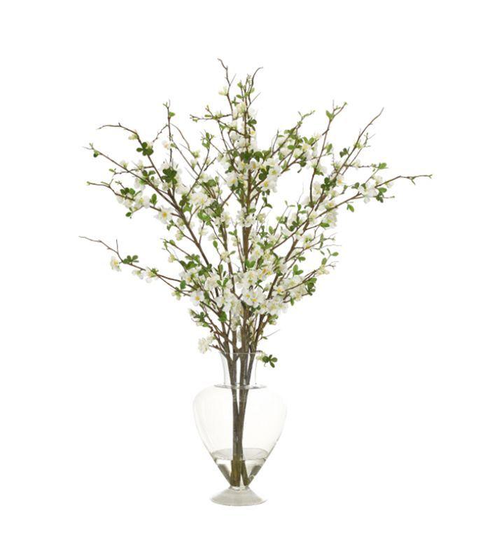 NDI Quince Blossom