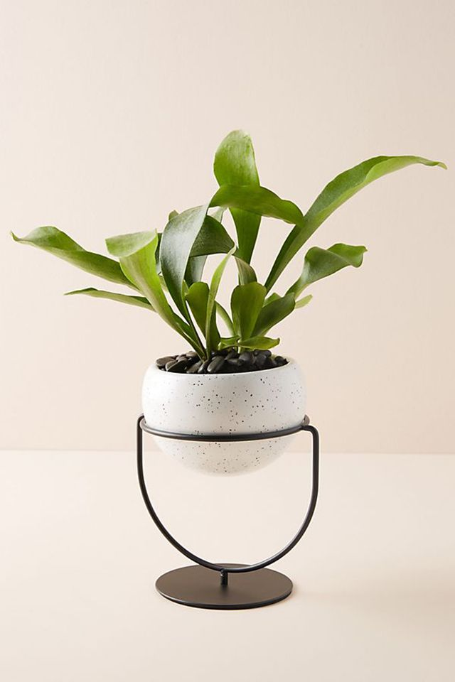 Anthropologie planter