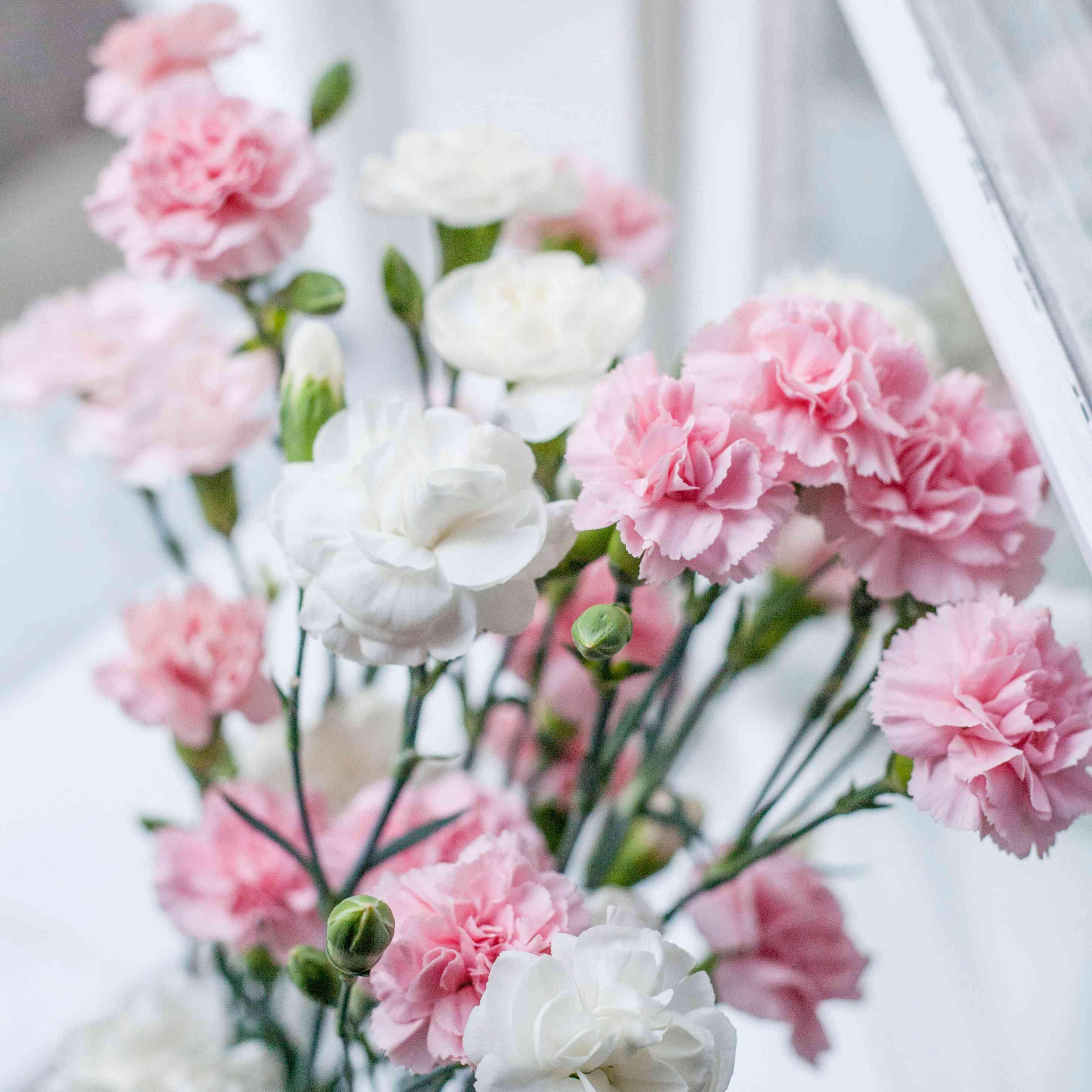 carnation birth month flower