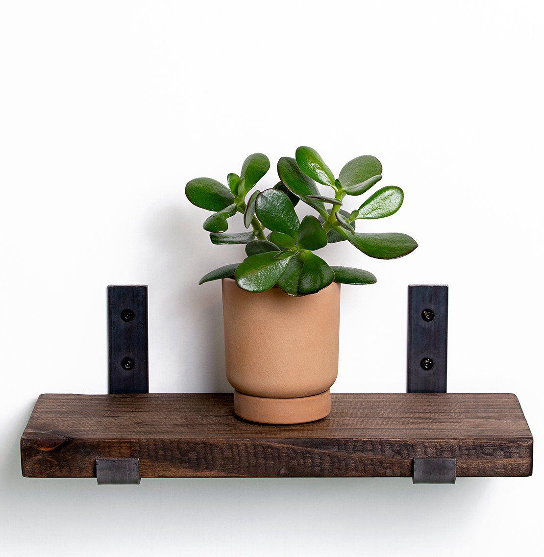 jade succulent plant