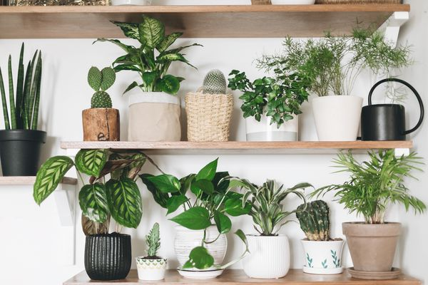 A container garden that includes the pothos plant